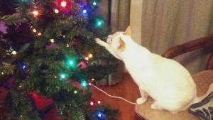 Branch Inspector