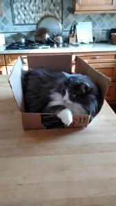 BoxcatIngrid1