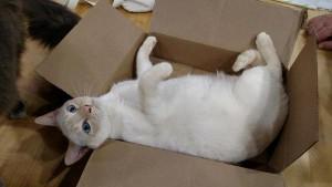 BoxcatNutmeg1