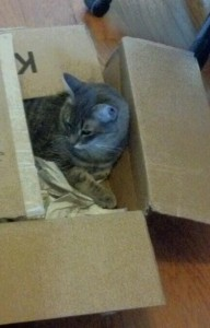BoxcatRupert1