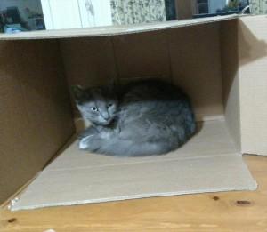 BoxcatSherman1
